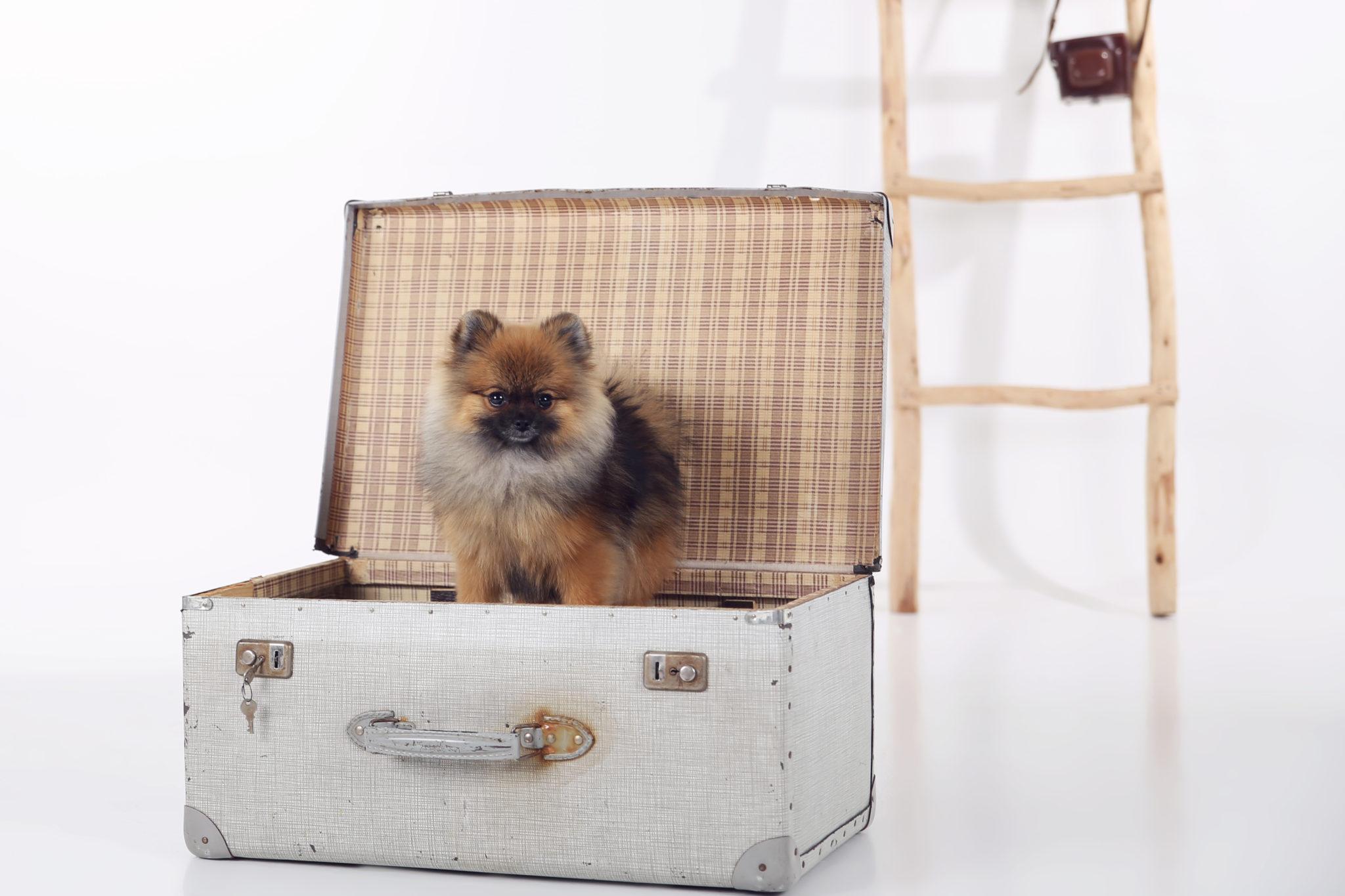 Dieren fotografie - Suus FotoSjop - Oldenzaal - Twente - Studio - Buiten - Leuk - Dog - Hond