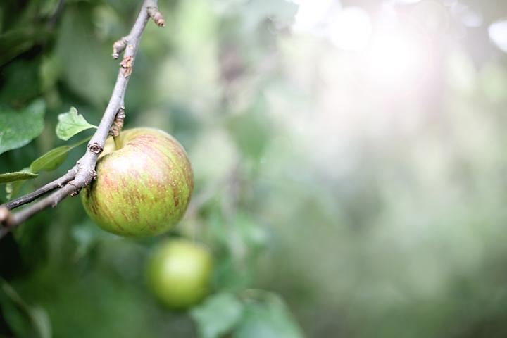 Sfeerfotografie - Sfeer - Suus FotoSjop - Oldenzaal - Hengelo - Enschede - Haaksbergen - Appels